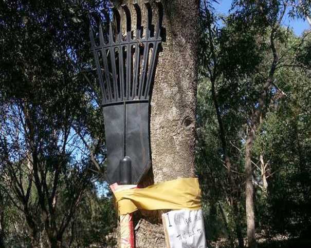 Rake tied to tree