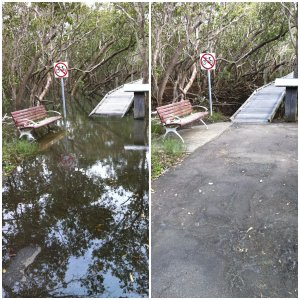 Badu Mangrove Boardwalk before and after.