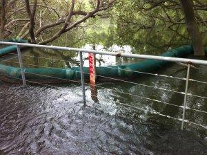 Powells Creek Tide Gauge
