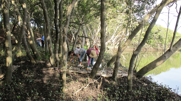 People Cleaning Up In The Mangroves