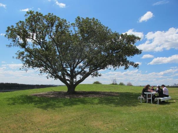 People sitting on new table near fig tree at Brickpit Park
