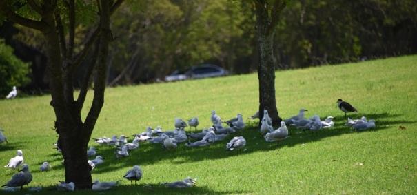 birds under tree