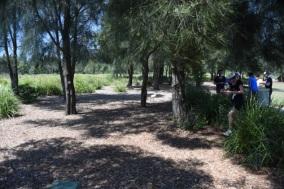 Blaxland Riverside Park trees