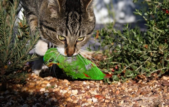 Cat with bird in mouth