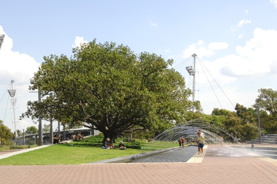 fig-grove