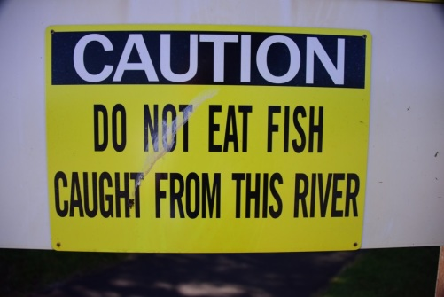 do not eat fish.jpg